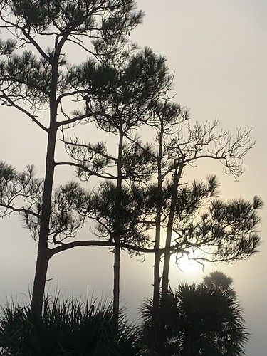 weekiwacheepreserve gulfcoast florida springhill nature pine palm fog sunrise