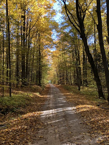 huronmanistee nationalforest outside national naturephoto leaf leaves colors colours tree trees landscape yellow orange red michigan autumn fall foliage