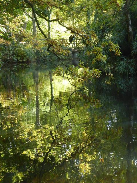 Winkworth Arboretum, Surrey