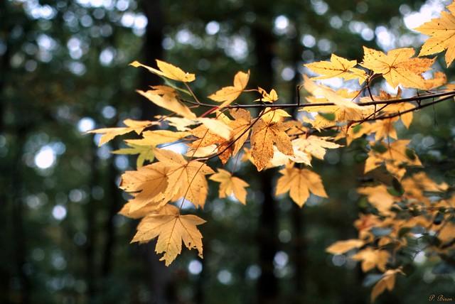 Couleurs d'automne - Forêt de Dreux