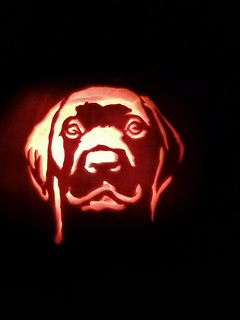 Labrador pumpkin