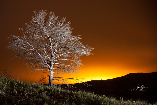 The Lost Forest (Vall de Gallinera, Spain 2012)