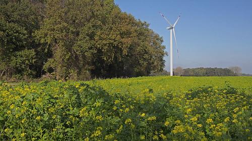 landscape farming seasons autumn fall fields woods timber windcraft windenergy intertillage zwischenfrucht senfsaat mustardseed