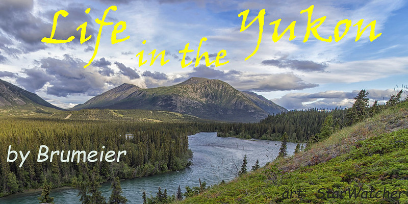Landscape.  Low mountains center background with blue sky & gray clouds overhead.  River, bordered by tall evergreens, zigzags from base of mountains to bottom left.  Text reads 'Life in the Yukon' crossing the sky in yellow Viner Hand.