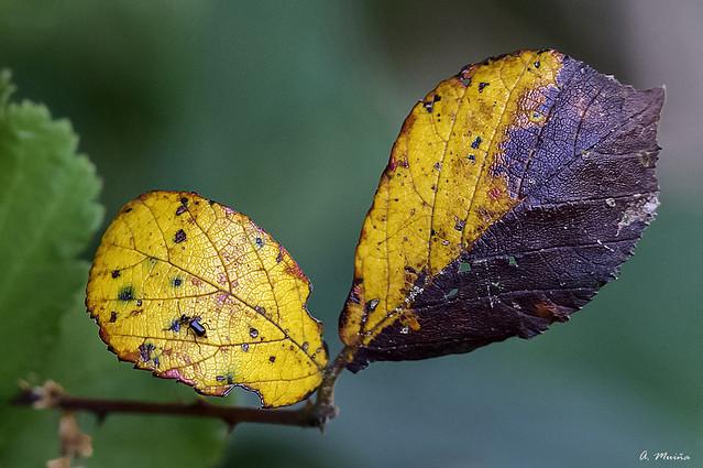 Autumn. Otoño