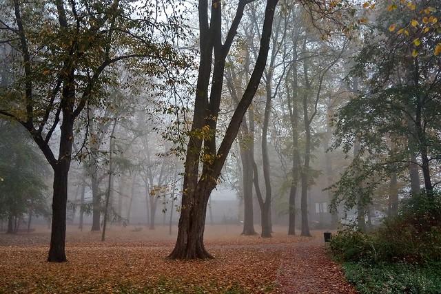 walking in the mist...