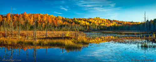 autumn reflection trees forest nature landscape morning foliage bog swamp water lilypads oldtrees deadwood maine mainehighlands penobscotcounty dextermaine carrroad