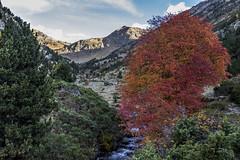 Pleta de La Rabassa, Principat d'Andorra