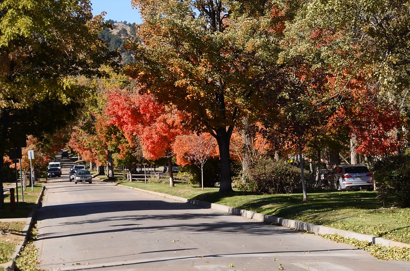 Maple in Fall, Boulder (68)