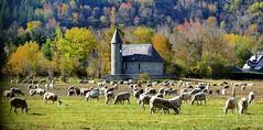 Guchen (Bigorre, Hautes-Pyrénées, Fr) – Chapelle Notre-Dame du Bouchet