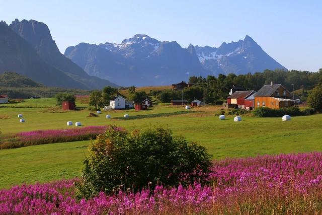 Colours of Lofoten islands