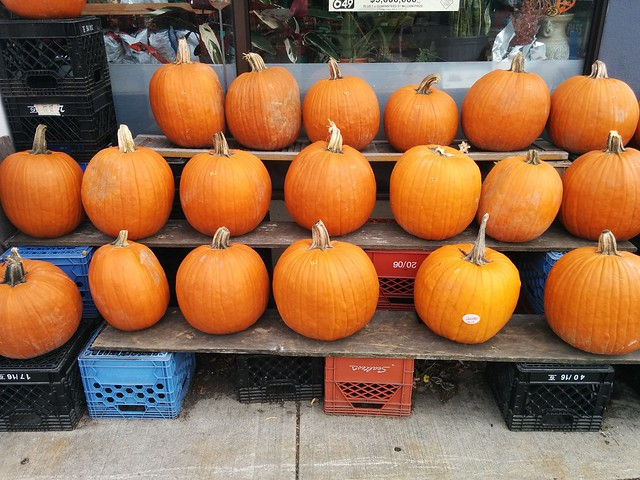 Orange pumpkins in rows #toronto #dovercourtvillage #dovercourtroad #orange #pumpkins #77foodmarket #latergram