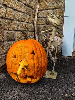 pumpkin_&_Mr_Nuts-6_MaxHDR_Dehaze_Contrast (1 of 1)