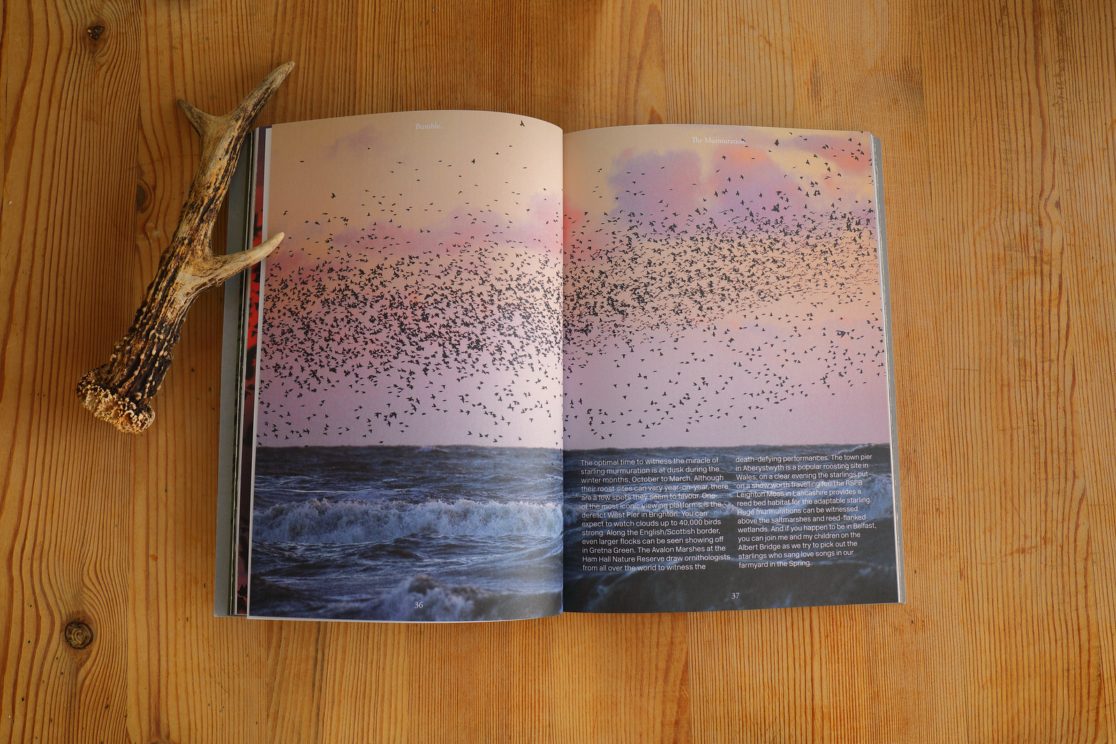 Bumble_Magazine_Murmuration_3