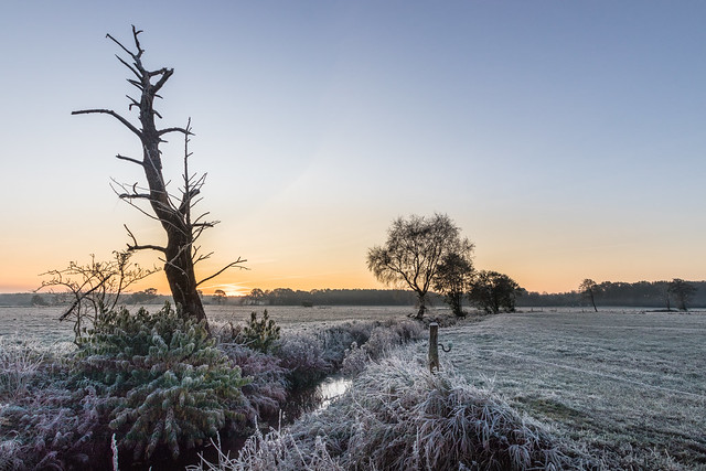 Dead tree in the frosty morning