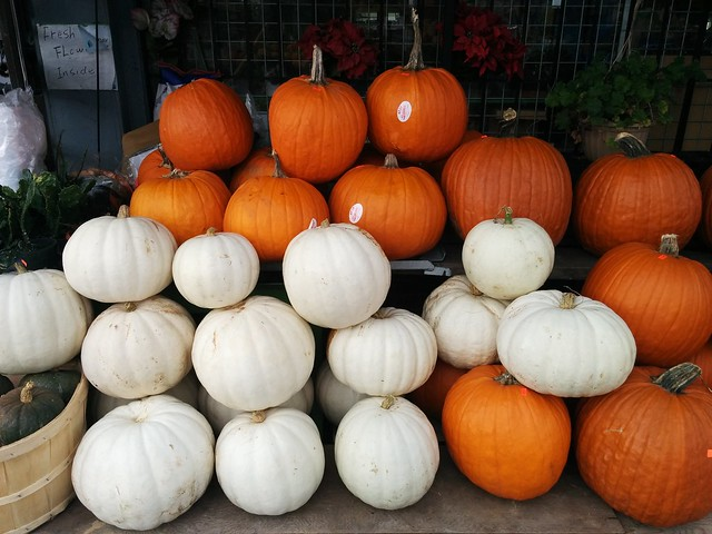 Orange and white pumpkins in rows #toronto #dovercourtvillage #dovercourtroad #orange #white #pumpkins #sunshinevariety #latergram