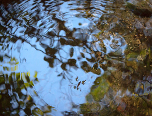 hanloncreek abstract insect reflection water waterstrider