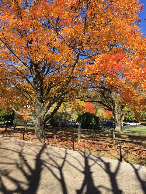 Halloween Shadowplay ~ Tree Dancing