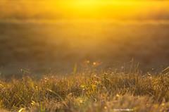 Golden sunset on the Moor.