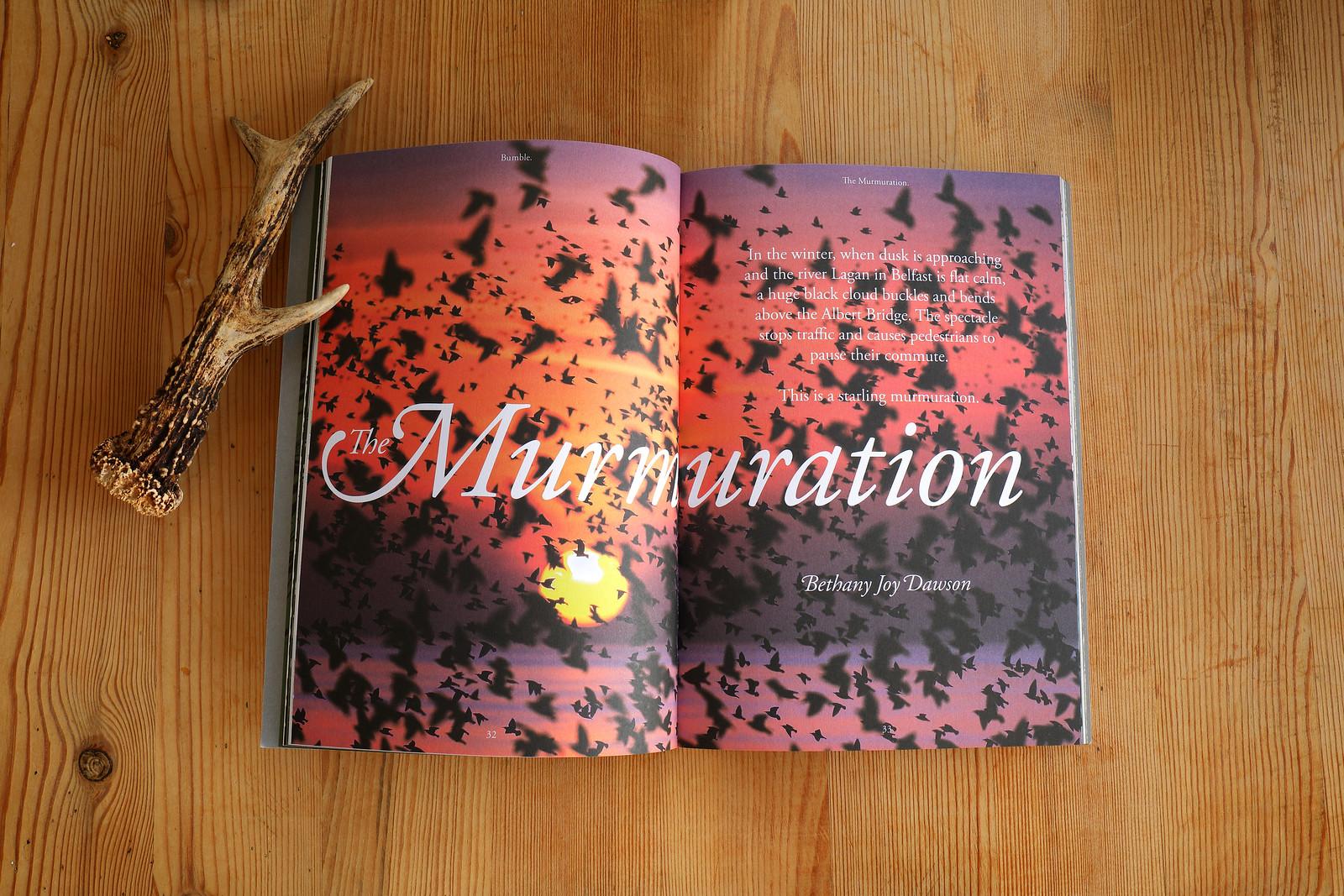 Bumble_Magazine_Murmuration