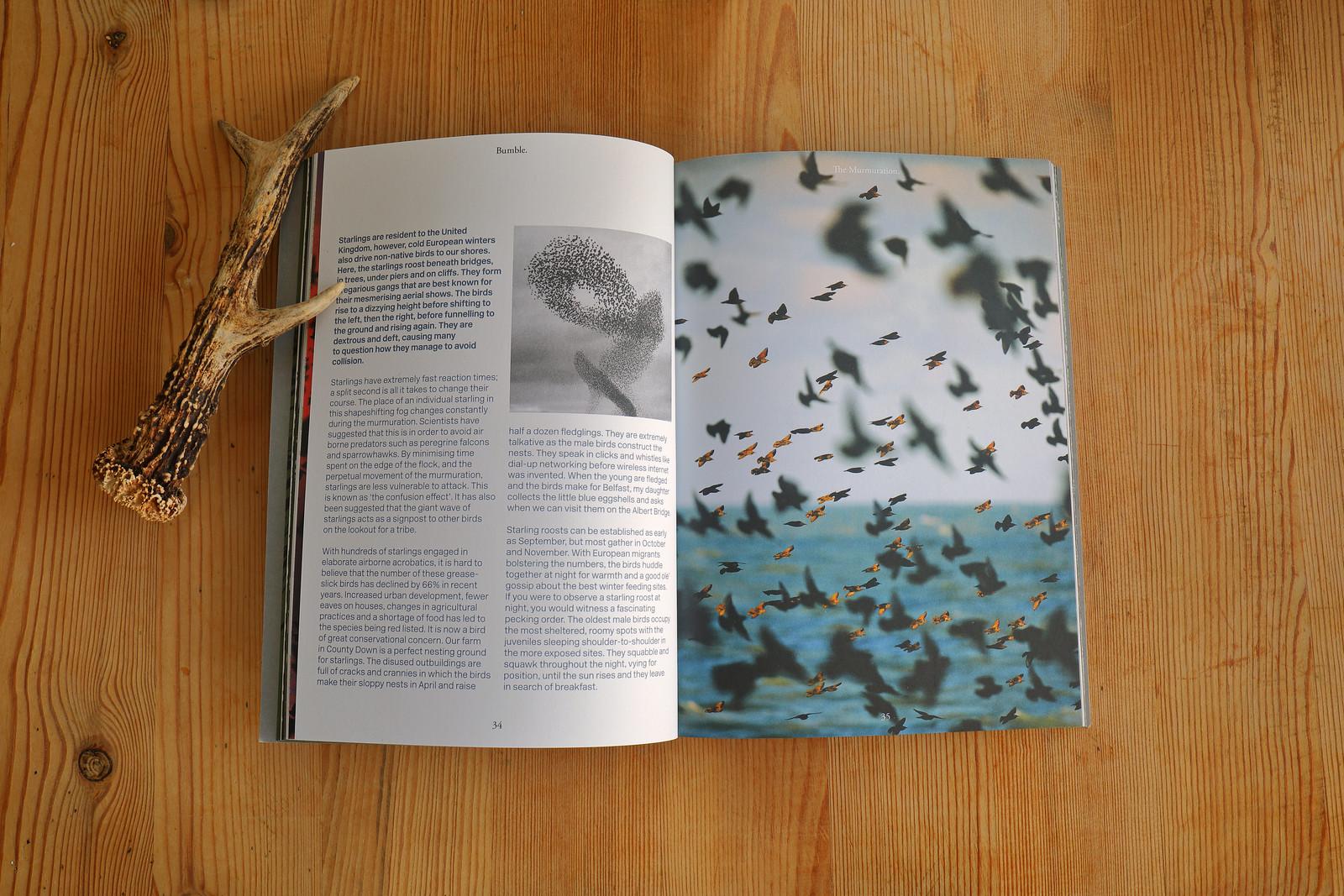 Bumble_Magazine_Murmuration_2