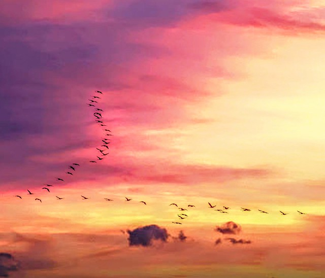 The farewell of our migratory birds 😘 Looking forward to their return!