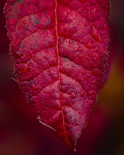 Autumnal raindrops