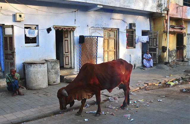India- Gujarat- Palitana
