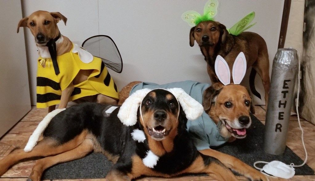 halloween bumblebee ether bunny fairy princess rottweiler potcake mastiff