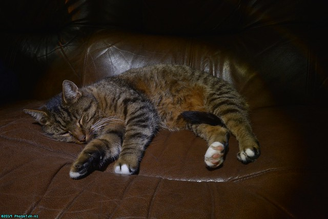 Neelix the Cat.