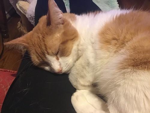My beloved Fizzy