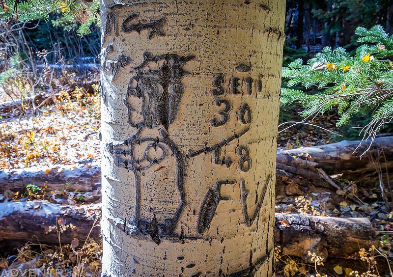 Arborglyph Design
