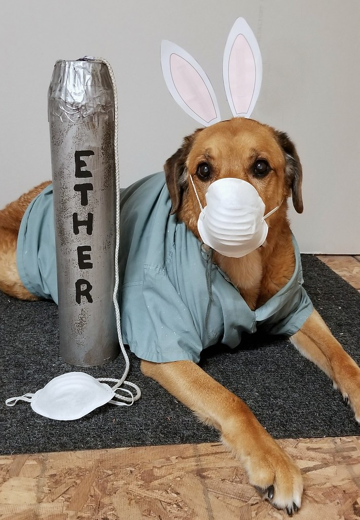 chloe ether bunny dog costume