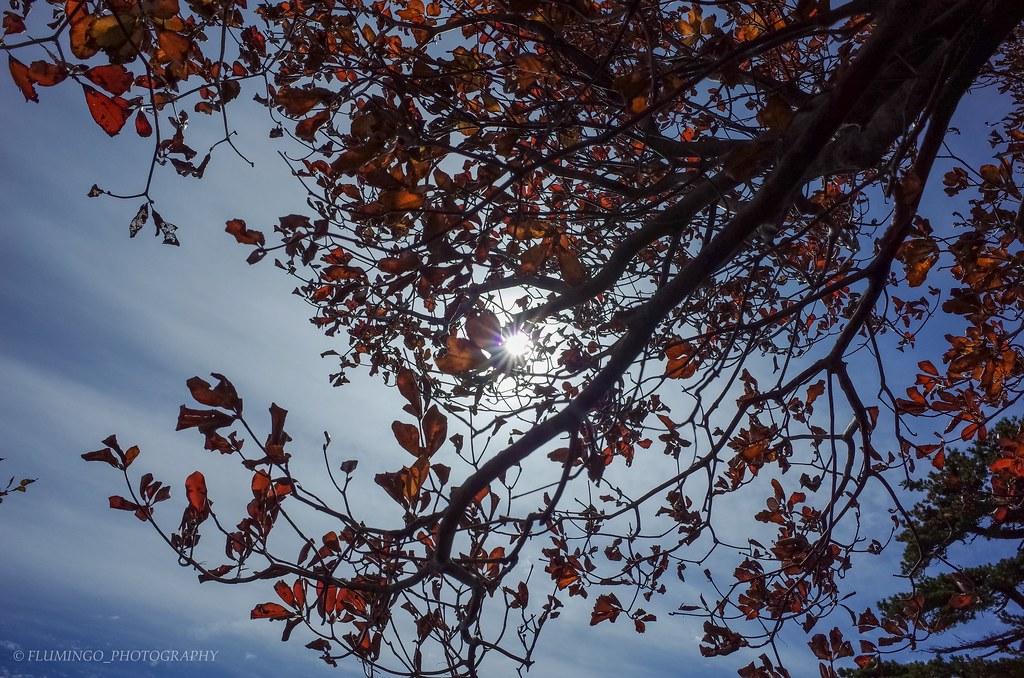 晩秋の石鎚山
