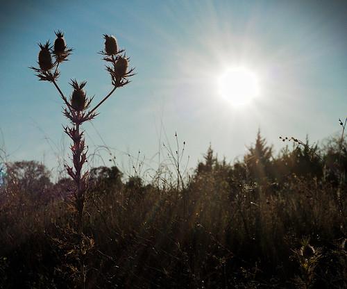 sun sunset landscape silhouette grass tree fall park thistle sky plants prairie outdoors day thirds leicam240 summicron50mmf20