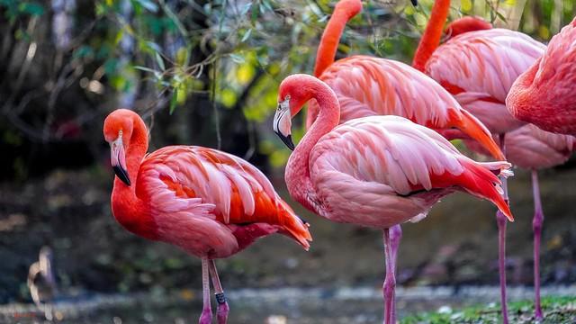 Flamingo Road - 7638