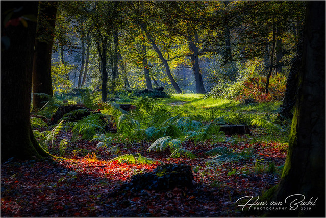 Nieuw Rande Bos - Diepenveen