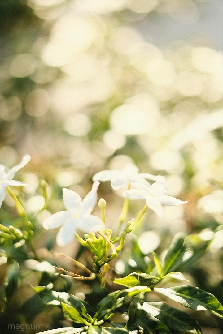 ภาพถ่ายหนองประจักษ์ อุดรธานี จากกล้อง Fujifilm X-T30