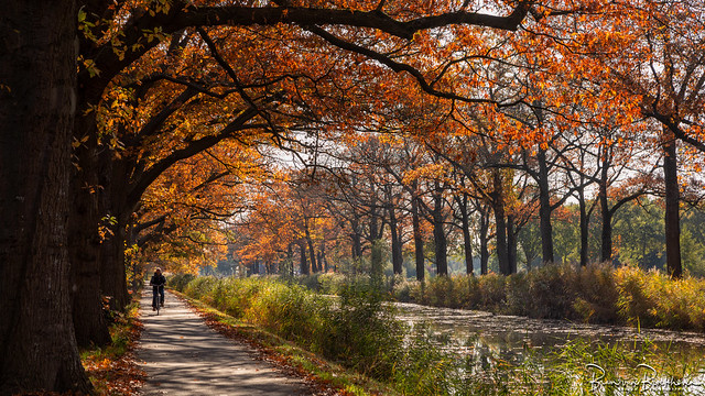 Cyclist under American Oaks in Autumn colors
