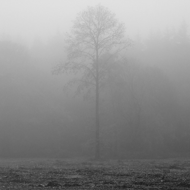 Alone in the Mist