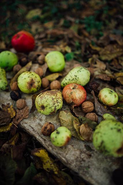 Autumn vegetables apple, nut, and pears.