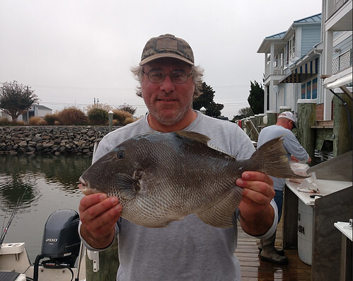 Photo of man holding state record gray triggerfish