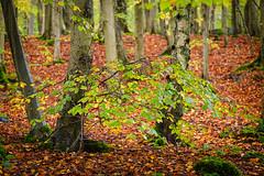 Autumn in Wet Woods