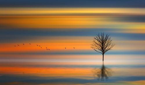 sky sunset sunrise digital art painting horizon water reflection river pond sea cloudage birds tree flight flying surreal flowing glowing