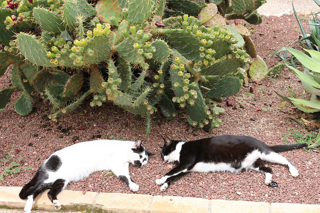 cats & cactuses