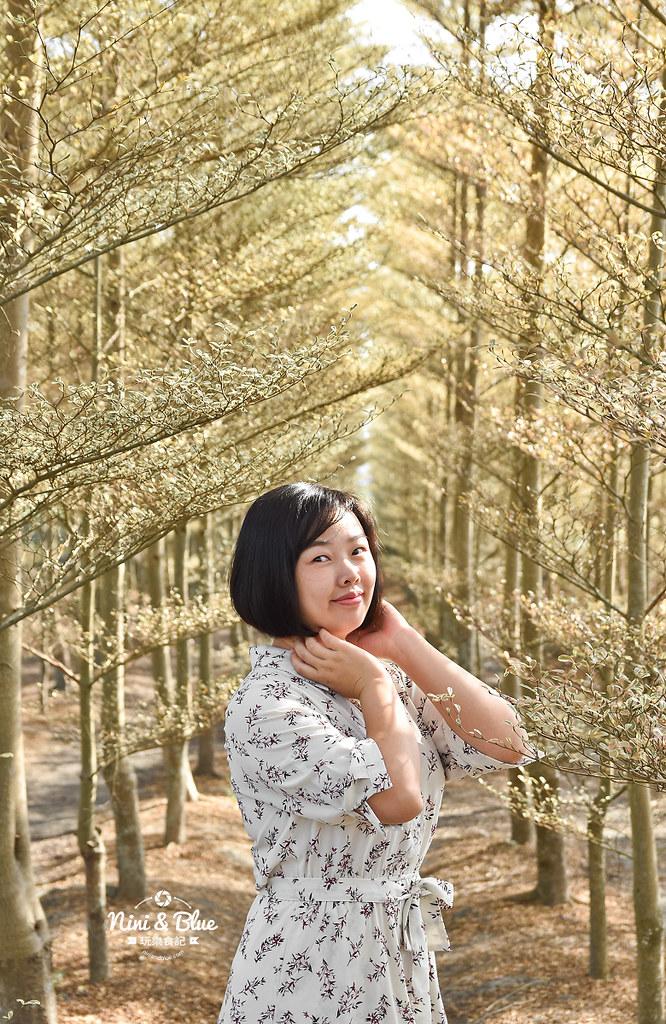 彰化田尾景點 小葉欖仁 冬季戀歌10