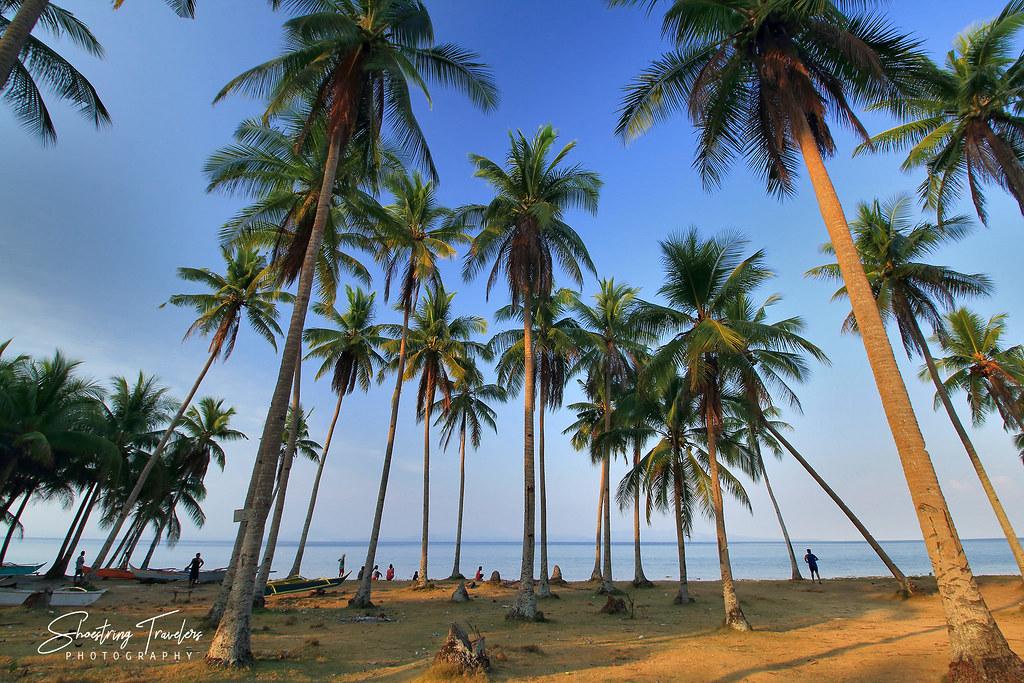 coconut grove at a beach in Barangay Benitinan