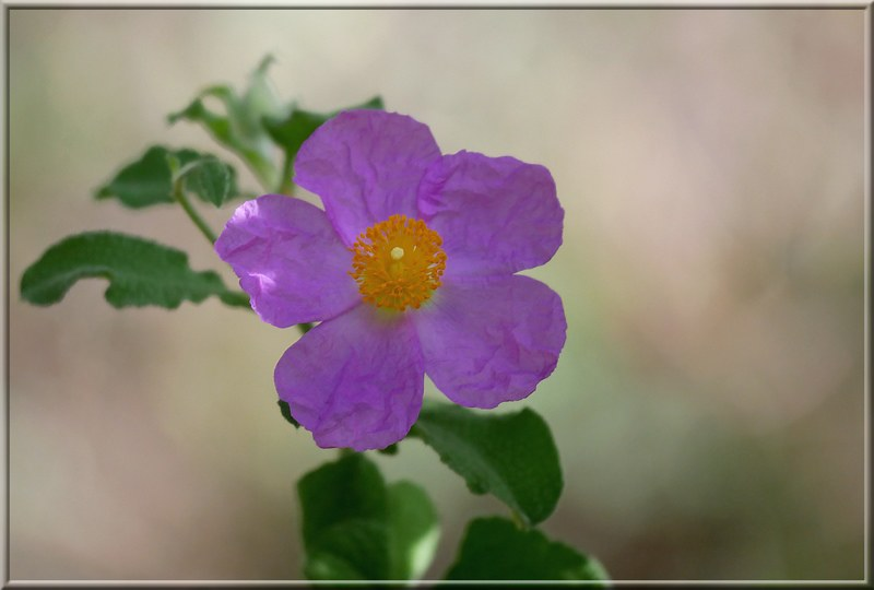 Au jardin des plantes. - Page 9 48995918556_c048a7a3f3_c