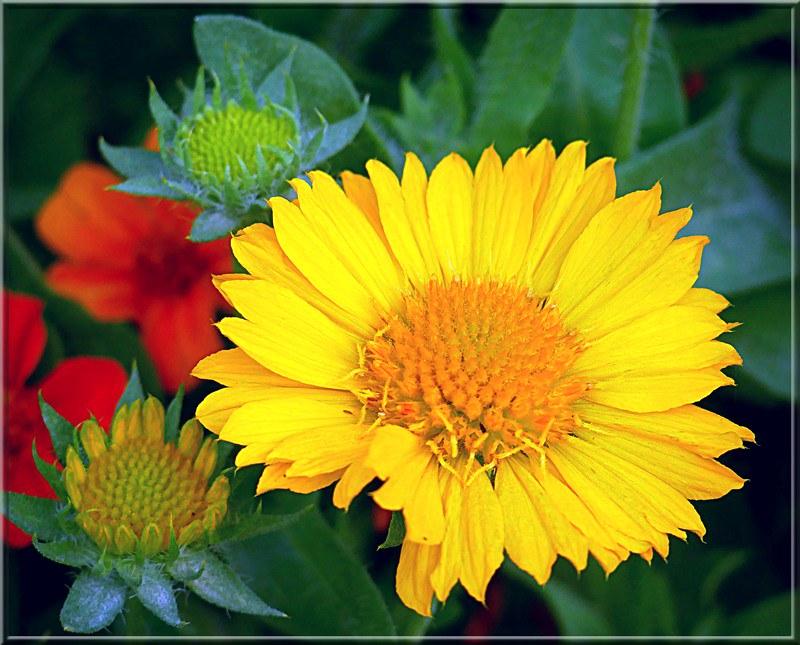 Au jardin des plantes. - Page 9 48996118587_c69805669a_c
