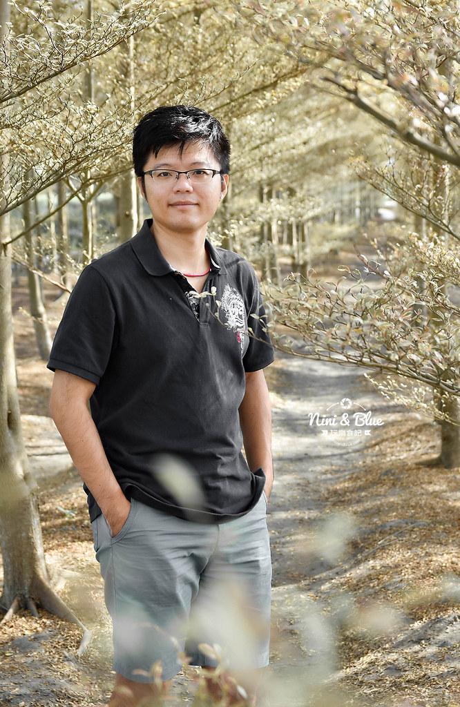 彰化田尾景點 小葉欖仁 冬季戀歌09
